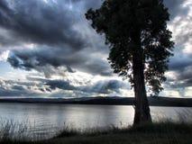 在湖的树在剧烈的天空下 免版税库存照片