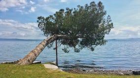 在湖的树 库存图片