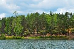 在湖的树 库存照片