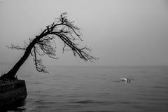 在湖的树 免版税库存照片