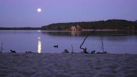 在湖的浪漫满月夜,与月亮的镇静水平面发出光线 游泳在湖的鸭子 股票视频