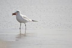 在湖的海鸥 图库摄影