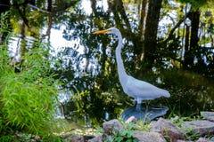 在湖的白色苍鹭 免版税库存图片