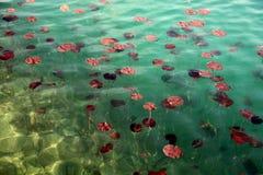 在湖的百合流血斯洛文尼亚 免版税库存照片