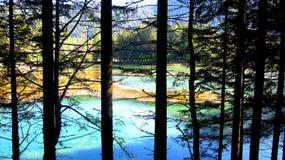 在湖的看法通过树 免版税库存图片
