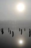 在湖的神秘的早晨 免版税库存照片