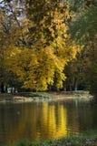 在湖的秋天五颜六色的叶子在Lazienki Krolewskie公园在华沙,波兰 免版税库存照片