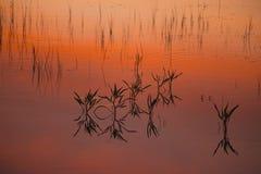 在湖的秋天日落 库存照片