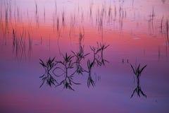 在湖的秋天日落 免版税库存图片