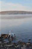 在湖的秋天早晨 免版税图库摄影
