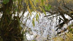 在湖的秋天横向 影视素材