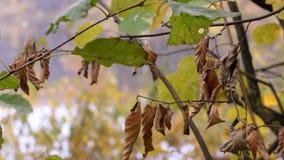 在湖的秋天横向 股票录像