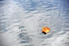 在湖的秋天色的枫叶 图库摄影