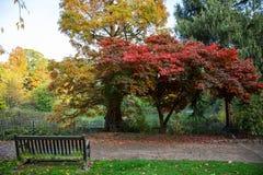 在湖的空的长凳在秋天 库存图片