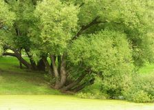 在湖的绿叶 免版税库存照片