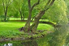 在湖的绿叶 图库摄影