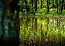 在湖的绿色反射 免版税库存照片