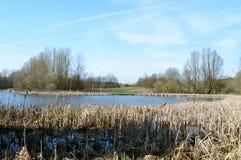 在湖的美丽如画的看法在一个晴天 免版税库存图片
