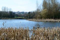 在湖的美丽如画的看法在一个晴天 免版税图库摄影