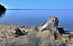在湖的老干树桩 免版税库存照片