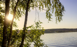 在湖的背景的树在一个晴天 库存图片