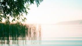 在湖的自然黎明日出,在湖上的树枝 库存图片