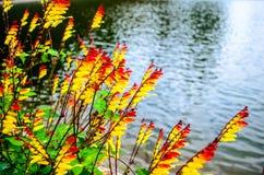 在湖的色的叶子 免版税库存照片
