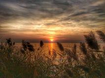 在湖的芦苇的日落 库存图片