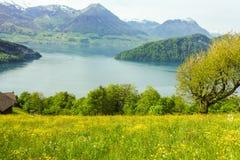 在湖的花田有山背景 免版税图库摄影