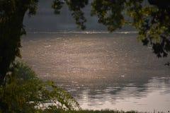 在湖的花粉 免版税库存照片