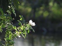 在湖的野花 库存图片