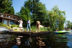 在湖的金毛猎犬 库存图片