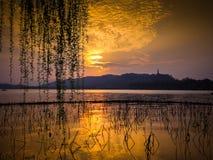 在湖的金黄云彩有在距离的山的 死的莲花词根和柳树剪影分支反对日落 图库摄影