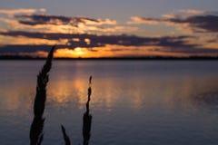 在湖的金黄日落有植物背景 免版税库存图片