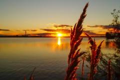 在湖的金黄日落有阳光的通过植物背景发光 图库摄影