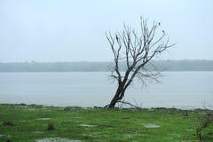 在湖的银行的一棵偏僻的树 免版税库存图片