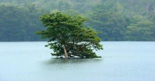 在湖的银行的一棵偏僻的树 库存照片