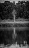在湖的银行的单色树 图库摄影