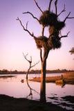 在湖的非洲黎明 免版税库存照片