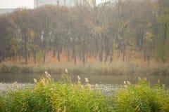 在湖的风 库存照片