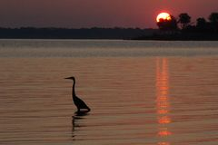 在湖的鸟 免版税库存图片