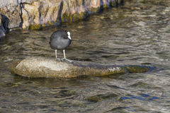 在湖的鸟 库存图片