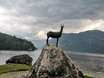 在湖的鹿 库存图片