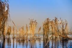 在湖的黎明 免版税库存照片