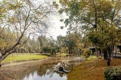 在湖的结构树 免版税库存图片