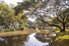 在湖的结构树 免版税图库摄影