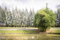 在湖的结构树 图库摄影