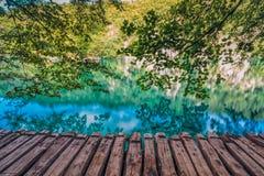 在湖的结构树 免版税库存照片