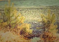 在湖的水的冰冷的融雪 免版税库存照片