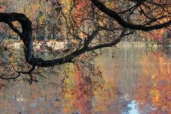 在湖的Autum颜色 库存图片